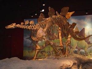 Dinosaurland KOA