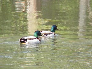 Longville Lake Park