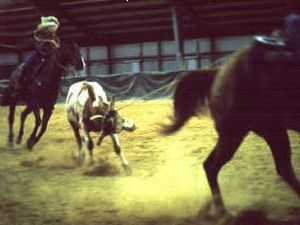 McPherson Quarter Horses