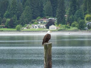 Eagle Tree RV Park - Poulsbo WA