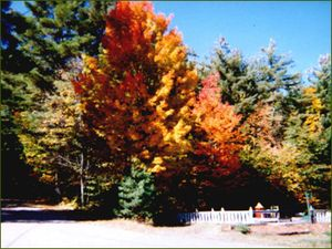 Magic Pines Campground - Lewis NY