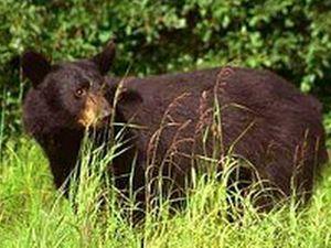 Bear Paw RV Park
